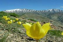بیش از 8 هزار گونه گیاهی در ایران شناسایی شد