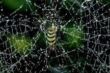 افزایش کارایی واکسن با استفاده از ابریشم عنکبوت