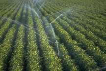 18هزار طرح آبیاری نوین در اراضی کشاورزی کشور اجرا شد