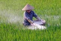 سه هزار و 500 تن کود شیمیایی در اختیار کشاورزان هرمزگان قرار گرفت