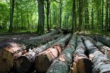 تبر سودجویی بر تن درختان ارسباران