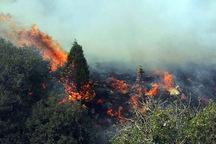 جنگلبانان کردستان سه بار آتش جنگل های مریوان را خاموش کردند