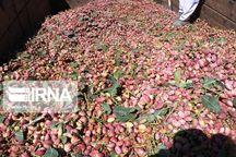 صادرات هشت هزار تن پسته از مهریز به خارج آغاز شد