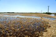 ورود خسارت ناشی از سیل به بیش از ۳۷ هزار و ۵۰۰ هکتار از اراضی کشاورزی اهواز