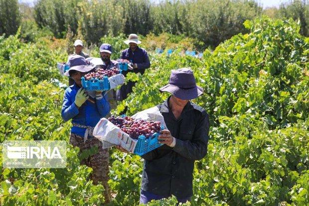 ۲۴۰ فرصت اشتغال روستایی در خمین فراهم شد