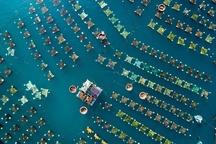 عکس روز نشنال جئوگرافیک، قفس شاه میگوها