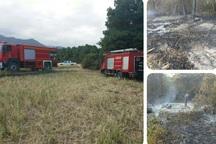 رئیس اداره منابع طبیعی تالش: عمدی بودن آتش سوزی جنگل ویزنه ثابت نشده است