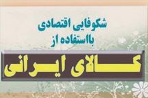 حمایت از کالای ایرانی مهمترین عامل تقویت اقتصاد کشور است