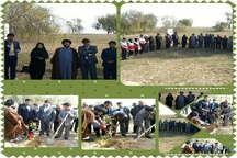امام جمعه دیلم: کاشت درخت در جامعه نهادینه شود