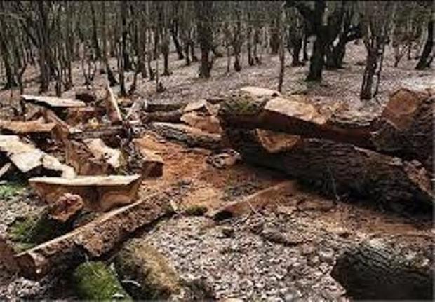 10 تن چوب جنگلی قاچاق در لاهیجان کشف شد