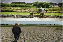 از کاشت برنج در ری تا خشکسالی در ورامین