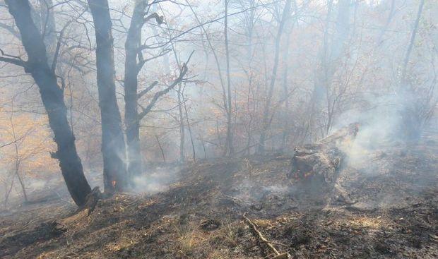 آتش پارک ملی گلستان خاموش شد
