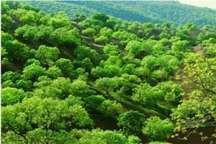 احیای جنگلهای زاگرس در محدوده نهاوند آغاز شد