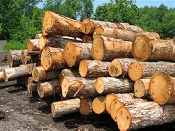 کشف محموله 70 تنی چوب قاچاق در فومن  ارزش 700 میلیون محموله کشف شده