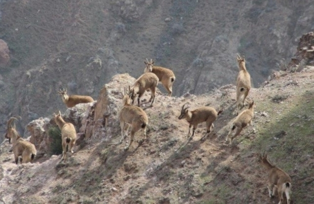 البرز دارای تنوع بالای گیاهی و جانوری است