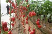 ایجاد مجتمع های کشاورزی راهکار یکپارچه سازی اراضی استان همدان است