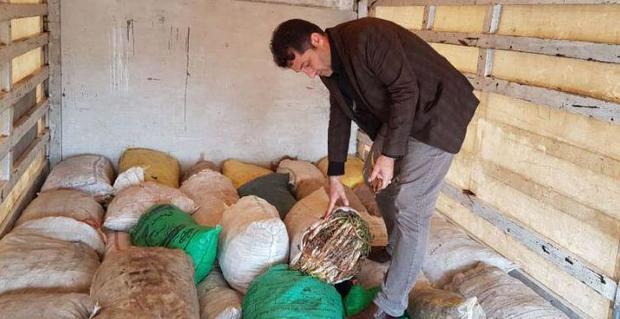 28 کیسه گیاهان خوراکی و دارویی در مرز باشماق کشف شد