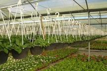 شهرک های گلخانه ای اردبیل به بخش خصوصی واگذار شد