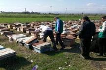 سپاه قزوین 170 کلنی زنبور عسل را از  سیلاب در گمیشان نجات داد