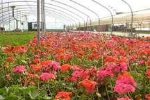 تولید محصولات کشاورزی در ایلام با راه اندازی شهرک های کشاورزی جهش می یابد