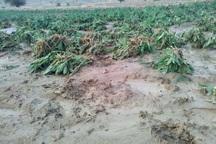 سیل و تگرگ 90 میلیارد ریال به کشاورزی خوشاب خسارت زد