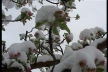 برف ارتفاعات مشگین شهر را سفیدپوش کرد