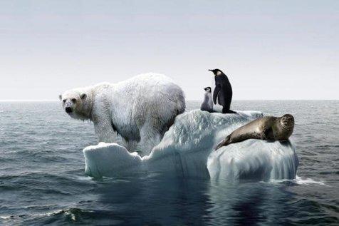 نیمی از حیوانات تا 83 سال دیگر منقرض می شوند