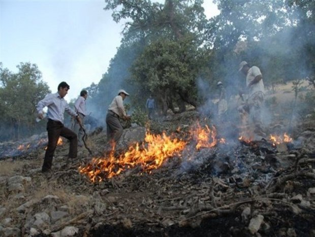 آتش سوزی در جنگل های بلوط پلدختر مهار شد