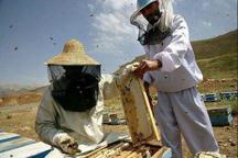 آذربایجان غربی تولیدکننده 27 درصد عسل کشور