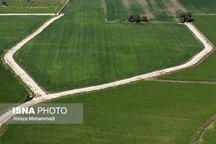 ۴۶ هزار هکتار از اراضی کشاورزی دامغان سنددار میشود