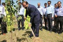 منطقه ویژه پارس درتوسعه جنگل کاری شفاف عمل نمی کند