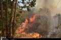 باد گرم موجب آتش سوزی در اراضی جنگلی آستارا شد