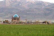 چمن سلطانیه در آستانه خشک شدن است؛ اقدامات پیشگیرانه اجرا شود