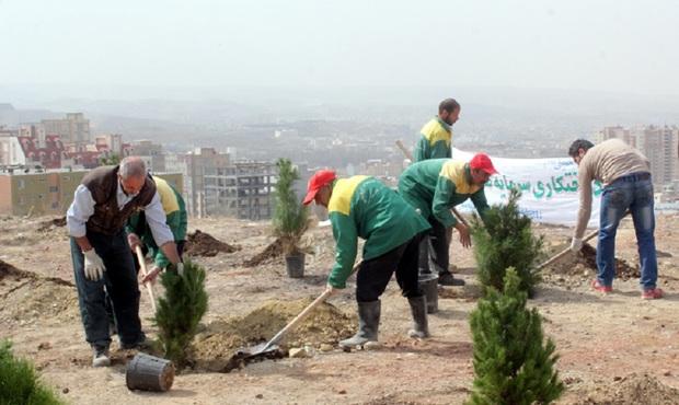 کاشت 64 هزار بوته درختچه در قزوین