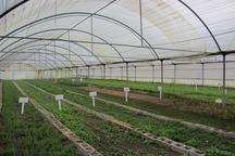 160 نفر متقاضی سرمایه گذاری در مجتمع گلخانه ای تاکستان شدند