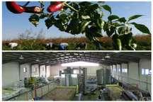 ایجاد واحد بستهبندی چرخه رونق کشاورزی را در میامی تکمیل میکند