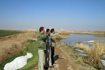 آنفولانزای پرندگان در استان مشاهده نشده است