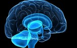 کمبود خواب باعث خودخوری مغز و آلزایمر می شود!