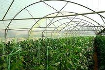 11 طرح فنی جهادکشاورزی سمنان با هدف صرفهجویی 30 درصدی مصرف آب