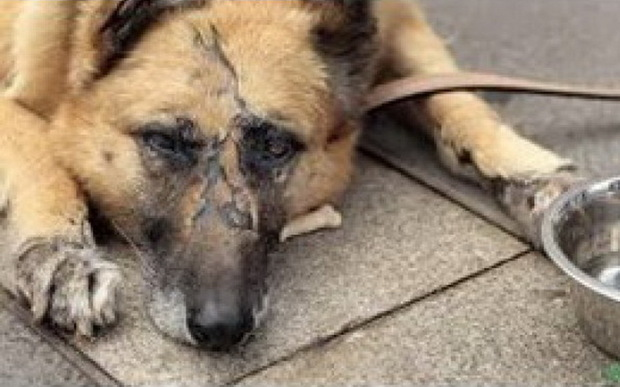 دستور شناسایی فرد سگ آزار در چایپاره صادر شد