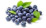 بلوبری میوه ای برای سلامت مغز