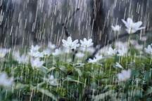 بارش باران در بوکان به 15 میلیمتر رسید