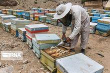 زنبورستانهای شهرستان طارم سرشماری میشود