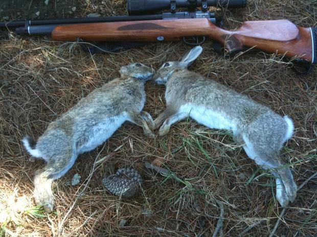 شکارچیان خرگوش در مراکان خوی دستگیر شدند