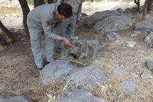 ۲۱ بطانه سنجاب ایرانی در زیستگاه های طبیعی کرمانشاه رها شد