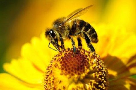 حمله زنبورها به ساکنان ساختمان مسکونی در عبدلآباد + تصاویر