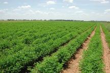 چهار سال همراه با ترقی بخش کشاورزی