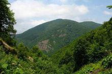 بیش از 24 میلیارد تومان به منابع طبیعی کرمان اختصاص یافت