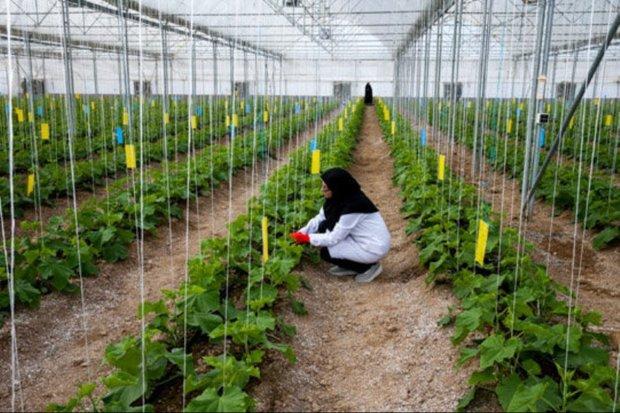 کشاورزی دانش بنیان محصول انقلاب
