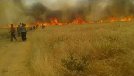کشاورزان مراقب آتش سوزی در مزارع باشند
